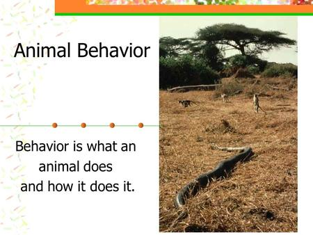 Animal Behavior Behavior is what an animal does and how it does it.