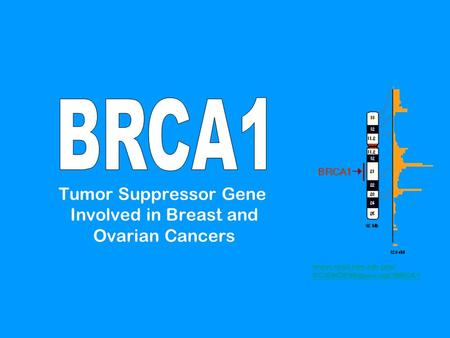 Tumor Suppressor Gene Involved in Breast and Ovarian Cancers www.ncbi.nlm.nih.gov/ SCIENCE96/gene.cgi?BRCA1.