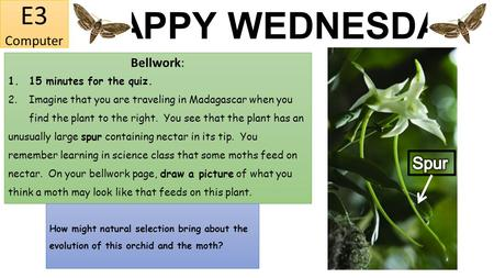 HAPPY WEDNESDAY E3 Computer Bellwork: 1.15 minutes for the quiz. 2.Imagine that you are traveling in Madagascar when you find the plant to the right. You.