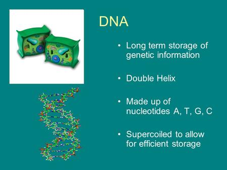 DNA Long term storage of genetic information Double Helix Made up of nucleotides A, T, G, C Supercoiled to allow for efficient storage.