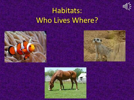 Habitats: Who Lives Where? Click to move forward Click to move back Click to go to habitats page.