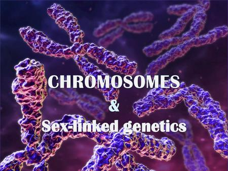 Lets Test our knowledge CHROMOSOMAL THEORY OF INHERITANCE Genes are located on chromosomes like beads on a string Some genes are linked (meaning they.