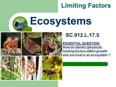 Limiting Factors Ecosystems SC.912.L.17.5 ESSENTIAL QUESTION: How do abiotic (physical) limiting factors affect growth and survival in an ecosystem ?