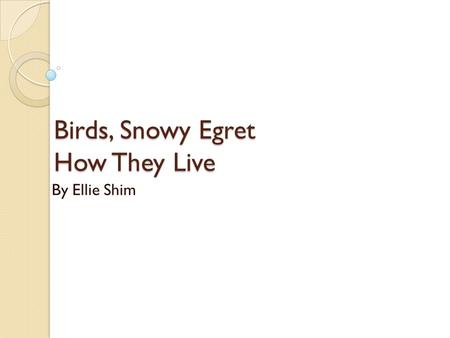 Birds, Snowy Egret How They Live By Ellie Shim. Basic life cycle They are a new born egg. Finally in the outside world Nearly an adult. Fully grown Snowy.