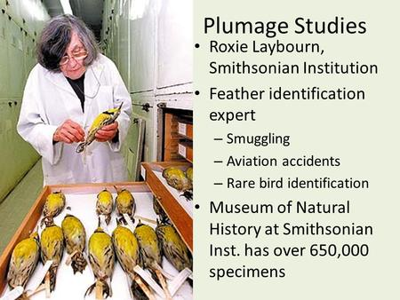 Plumage Studies Roxie Laybourn, Smithsonian Institution Feather identification expert – Smuggling – Aviation accidents – Rare bird identification Museum.