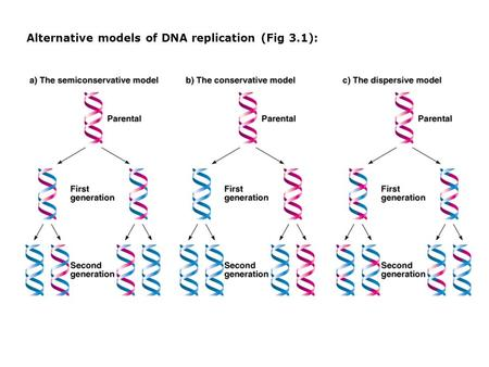 Alternative models of DNA replication (Fig 3.1):.