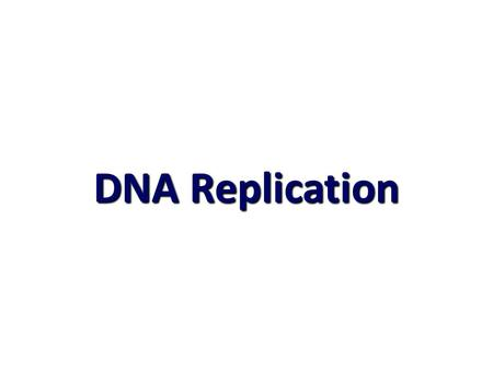 DNA Replication. II- DNA Replication II- DNA Replication Origins of replication Origins of replication Replication ForkshundredsY-shaped replicating DNA.