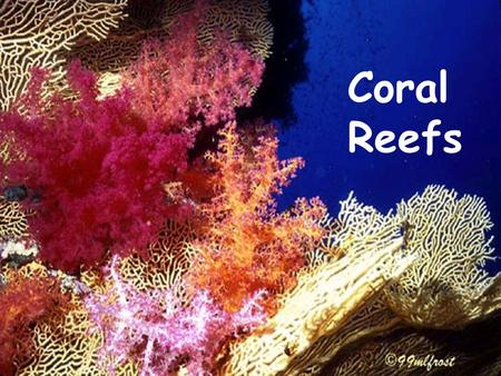 Coral Reefs By Laura Leyda and Jennifer EnglerBy Laura Leyda and Jennifer Engler.