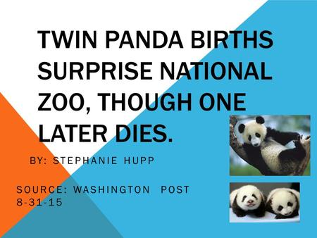 TWIN PANDA BIRTHS SURPRISE NATIONAL ZOO, THOUGH ONE LATER DIES. BY: STEPHANIE HUPP SOURCE: WASHINGTON POST 8-31-15.