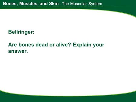 Bones, Muscles, and Skin Bellringer: Are bones dead or alive? Explain your answer. - The Muscular System.