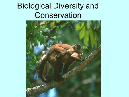 Biological Diversity and Conservation. Biodiversity The variety of life in an area. The simplest and most common measure of biodiversity is the total.