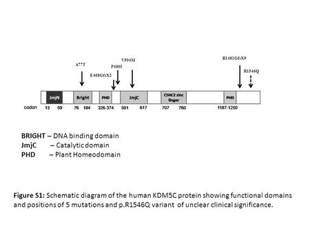 A77T V504M P480I E468GfsX2 R1481GfsX9 R1546Q Figure S1: Schematic diagram of the human KDM5C protein showing functional domains and positions of 5 mutations.