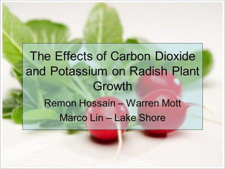 The Effects of Carbon Dioxide and Potassium on Radish Plant Growth Remon Hossain – Warren Mott Marco Lin – Lake Shore.