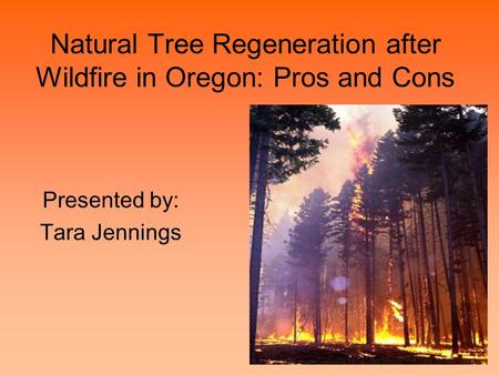 Natural Tree Regeneration after Wildfire in Oregon: Pros and Cons Presented by: Tara Jennings.