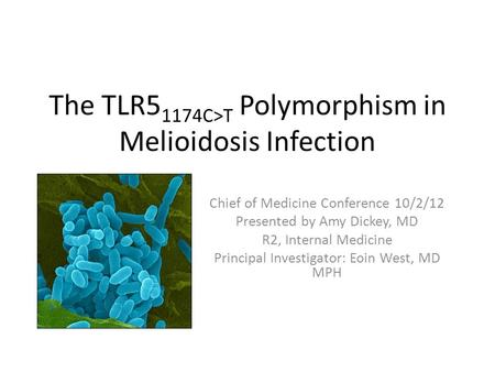 The TLR5 1174C>T Polymorphism in Melioidosis Infection Chief of Medicine Conference 10/2/12 Presented by Amy Dickey, MD R2, Internal Medicine Principal.