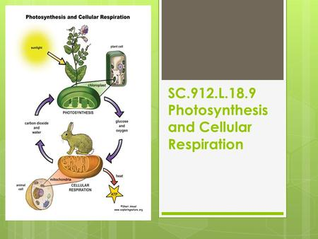 SC.912.L.18.9 Photosynthesis and Cellular Respiration.