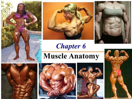 Chapter 6 The Muscle Anatomy. The Muscular System Functions  Movement  Maintain posture  Stabilize joints  Generate heat Three basic muscle types.