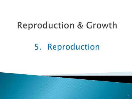 5.Reproduction 1. People reproduce by making babies 2 Vocabulary: reproduce to make more of the species.