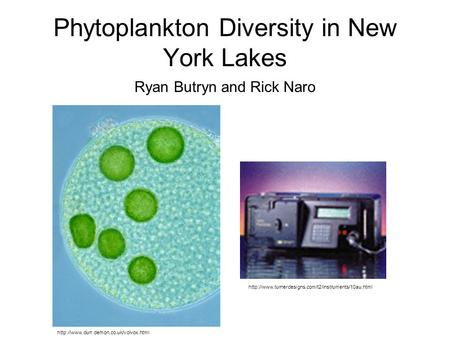 Phytoplankton Diversity in New York Lakes Ryan Butryn and Rick Naro