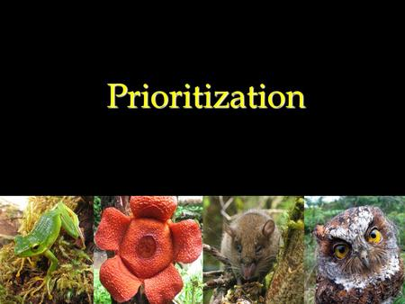 Prioritization. 128 KBAs were divided into four (4) priority levels/tiers Data used: (no population data available for most species)  extent of occurrence/area.