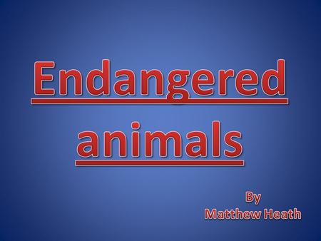 Endangered Animals How are animals endanger ? Humans destroy precious habitat the natural environment of a living thing when they fill swamps and marshes,