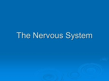 The Nervous System. What is regulation?  The control and coordination of all bodily activities.
