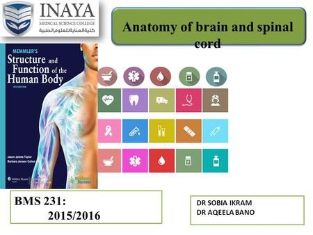 Anatomy of brain and spinal cord BMS 231: 2015/2016 DR SOBIA IKRAM DR AQEELA BANO.