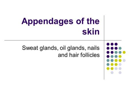 Appendages of the skin Sweat glands, oil glands, nails and hair follicles.
