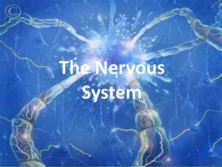 The Nervous System. Functions of the Nervous System 1. Monitors internal and external environment 2. Take in and analyzes information 3. Coordinates voluntary.
