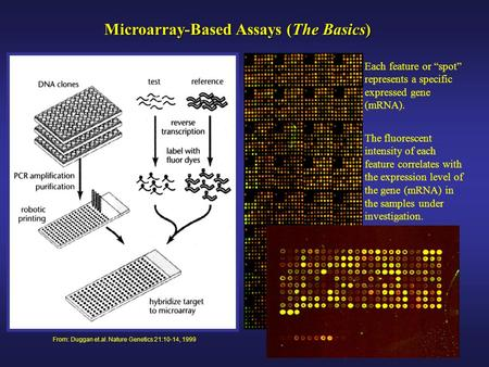 "From: Duggan et.al. Nature Genetics 21:10-14, 1999 Microarray-Based Assays (The Basics) Each feature or ""spot"" represents a specific expressed gene (mRNA)."