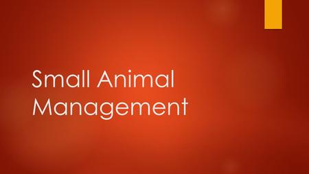 Small Animal Management. Objective  I will learn  ways to train and create behavior management  Housing, boarding, and transporting options  Breeding.