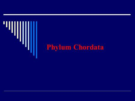 Phylum Chordata. Characteristics of all chordates Dorsal, hollow nerve cord Post-anal tail Gill pouches at some time in the live Notochord The most complex.