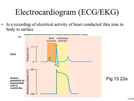 Electrocardiogram (ECG/EKG) Is a recording of electrical activity of heart conducted thru ions in body to surface Fig 13.22a 13-60.