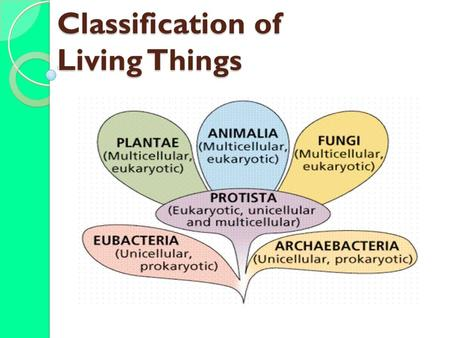 Classification of Living Things. _______________ = branch of biology that names and groups organisms according to their _________________________ Does.