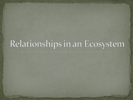 Relationships in an Ecosystem