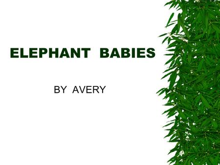 ELEPHANT BABIES BY AVERY. What is it called when a group of elephants come together  A group of elephants is called a herd.