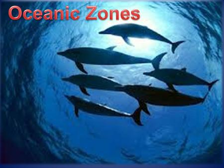 I. The Pelagic Zone A. Begins at the low tide mark and includes the oceanic water column. B. Two zones: Neritic and Oceanic.