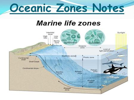 Oceanic Zones Notes. Overview More than 250,000 identified marine species Most live in sunlit surface seawater Species success depends on ability to: