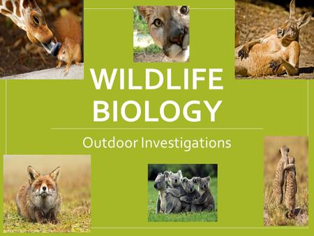 wildlife biology Other zoologists and wildlife biologists are identified by the aspects of zoology and wildlife biology they study, such as evolution and animal behavior following are some examples: botanists study plants, including their growth, diseases, and structures.
