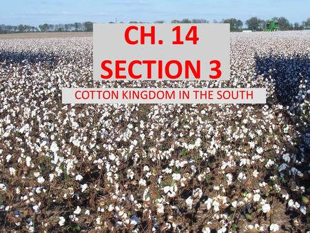 CH. 14 SECTION 3 COTTON KINGDOM IN THE SOUTH. OBJECTIVES How did the cotton gin improve cotton production in the South? How did the South become an agricultural.