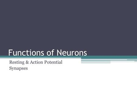 Functions of Neurons Resting & Action Potential Synapses.