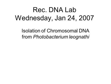 Rec. DNA Lab Wednesday, Jan 24, 2007 Isolation of Chromosomal DNA from Photobacterium leognathi.