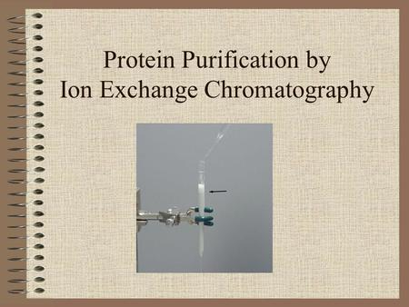 Protein Purification by Ion Exchange Chromatography.