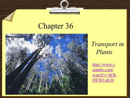 Chapter 36 Transport in Plants  outube.com/ watch?v=hOb 8WWLxKJ0.