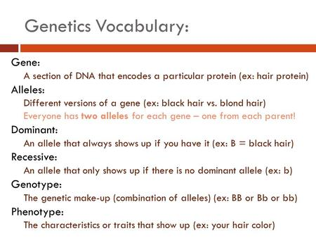 Genetics Vocabulary: Gene: A section of DNA that encodes a particular protein (ex: hair protein) Alleles: Different versions of a gene (ex: black hair.