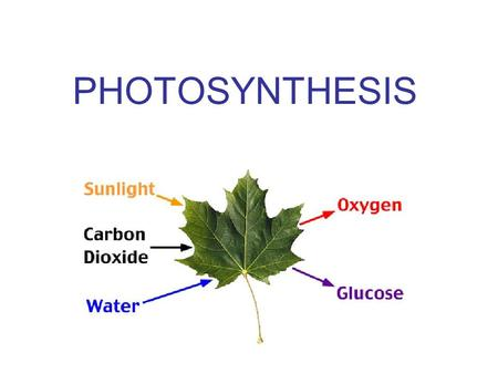 PHOTOSYNTHESIS. All organisms need energy to drive life's processes Energy Ability to do work needed for all biological processes.