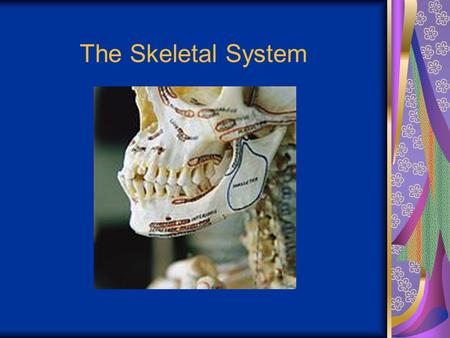 The Skeletal System. Parts of the skeletal system Bones (skeleton) Joints Cartilages Ligaments Divided into two divisions Axial skeleton Appendicular.