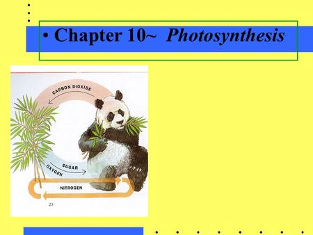 Chapter 10~Photosynthesis. A. Photosynthesis in nature Autotrophs: (SELF- FEEDERS)biotic producers; photoautotrophs; chemoautotrophs; obtains organic.