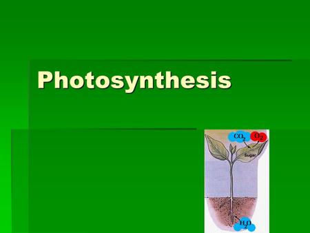 Photosynthesis. Capturing the Energy in Light  Photosyntheis- process by which energy from the sun is converted to organic molecules  Plants, algae,