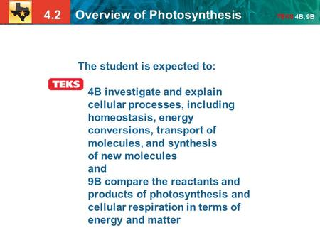 4.2 Overview of Photosynthesis TEKS 4B, 9B The student is expected to: 4B investigate and explain cellular processes, including homeostasis, energy conversions,
